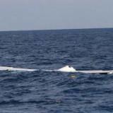 Tuninter vol 1153 – Panne Sèche au Dessus de la Mer